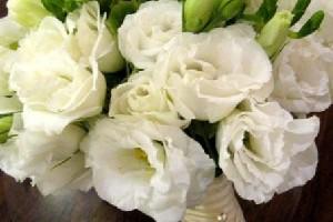 editWHW-10Awhite_eustoma_bridal_bouquet(160)